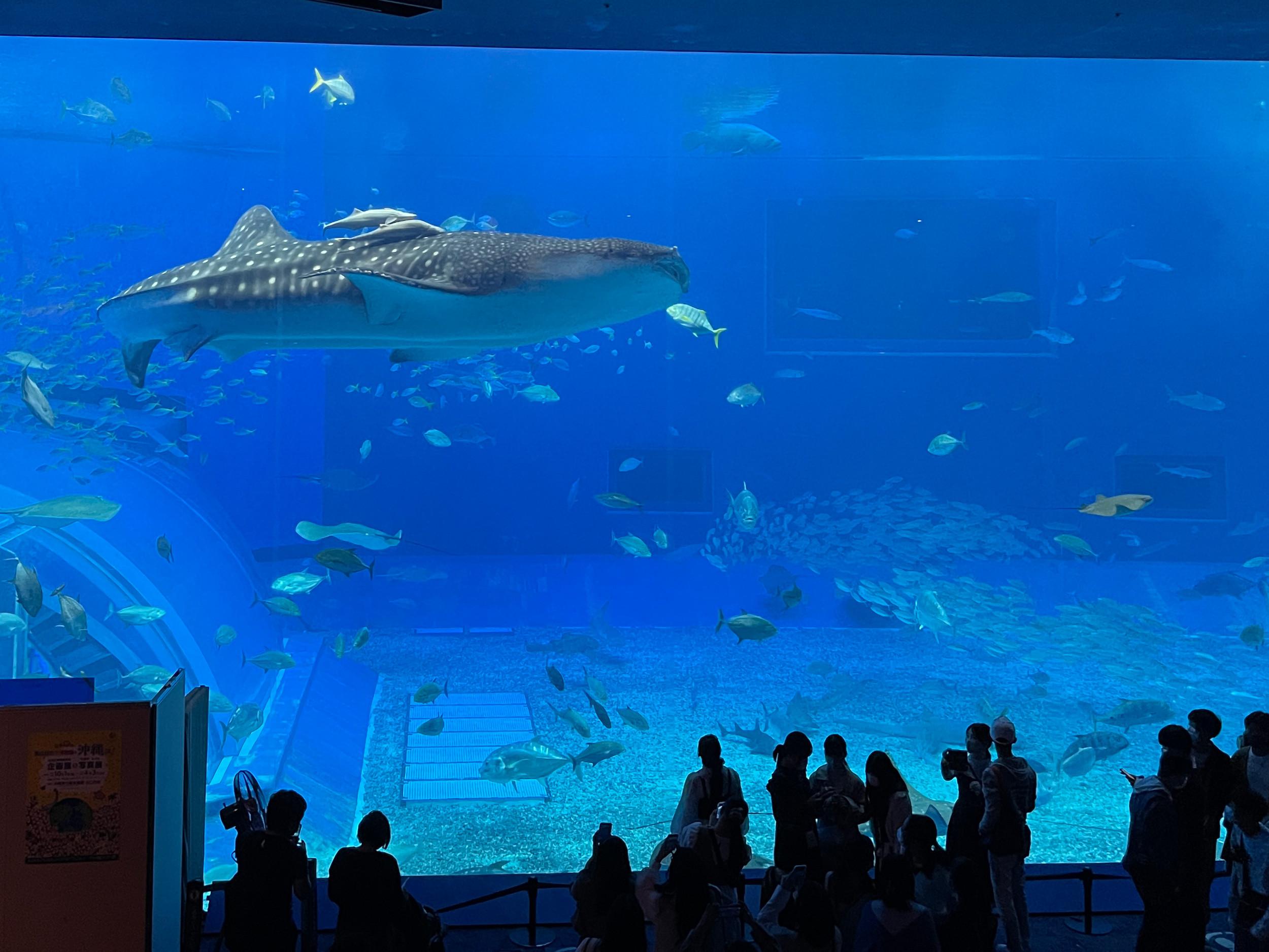 【2019】美ら海水族館の割引方法9選!コンビニで買えるチケット&レンタカーとのセットプランまとめ!