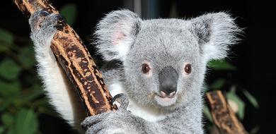 【多摩動物公園】ランチにおすすめレストラン・コアラ弁当!お弁当の持ち込みはOK?