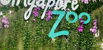 【徹底解説】シンガポール動物園の見どころと基本情報まとめ!アニマルショー&体験型アクティビティも