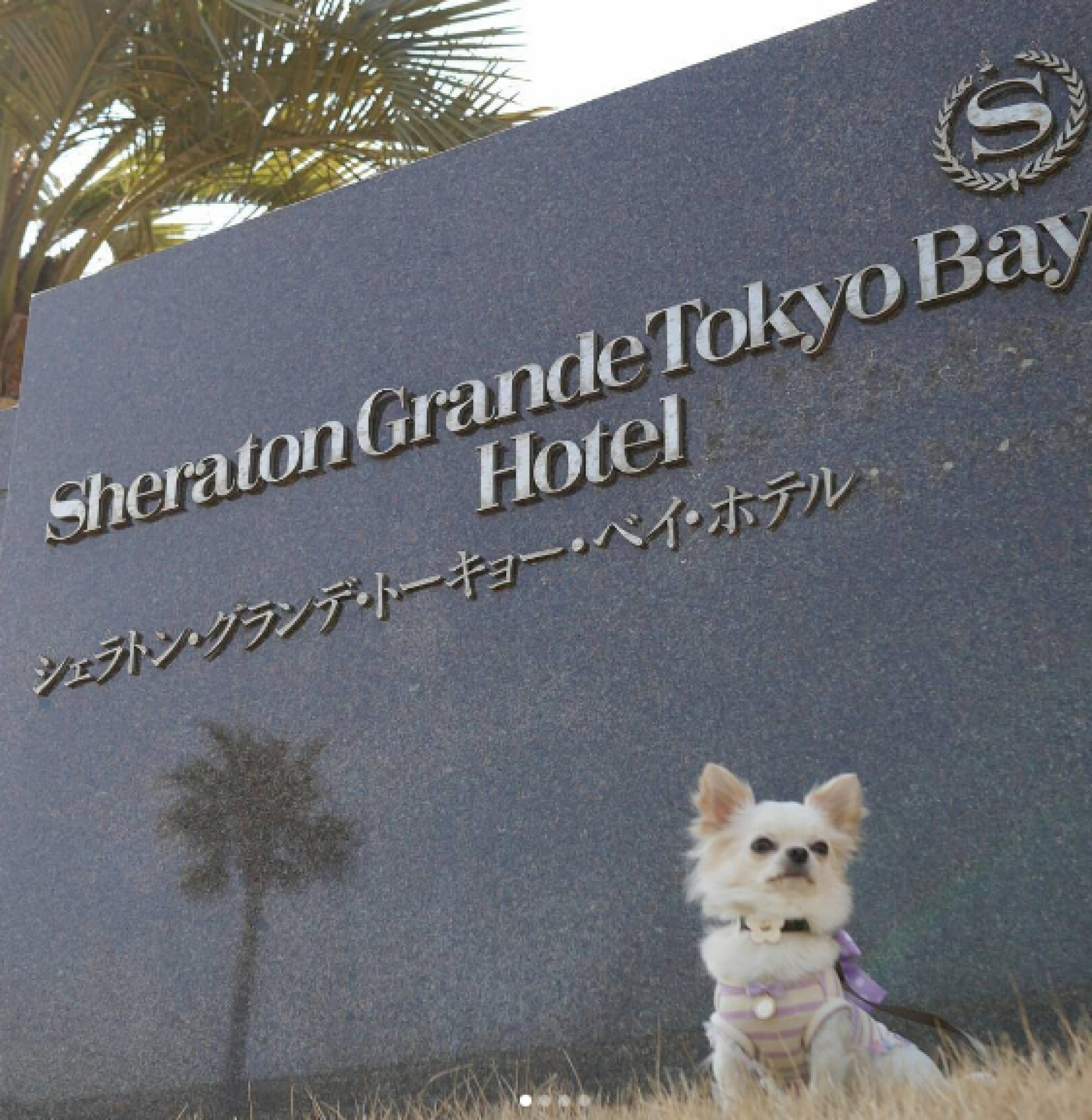 ワンちゃんと宿泊できるのは、東京ディズニーリゾートでここだけ