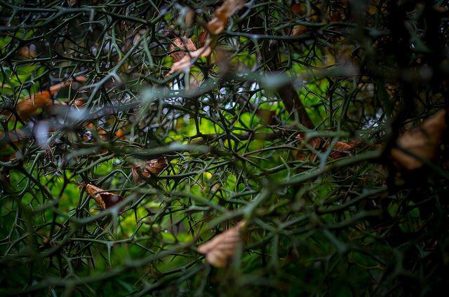 「いばら姫」とも呼ばれる「眠れる森の美女」