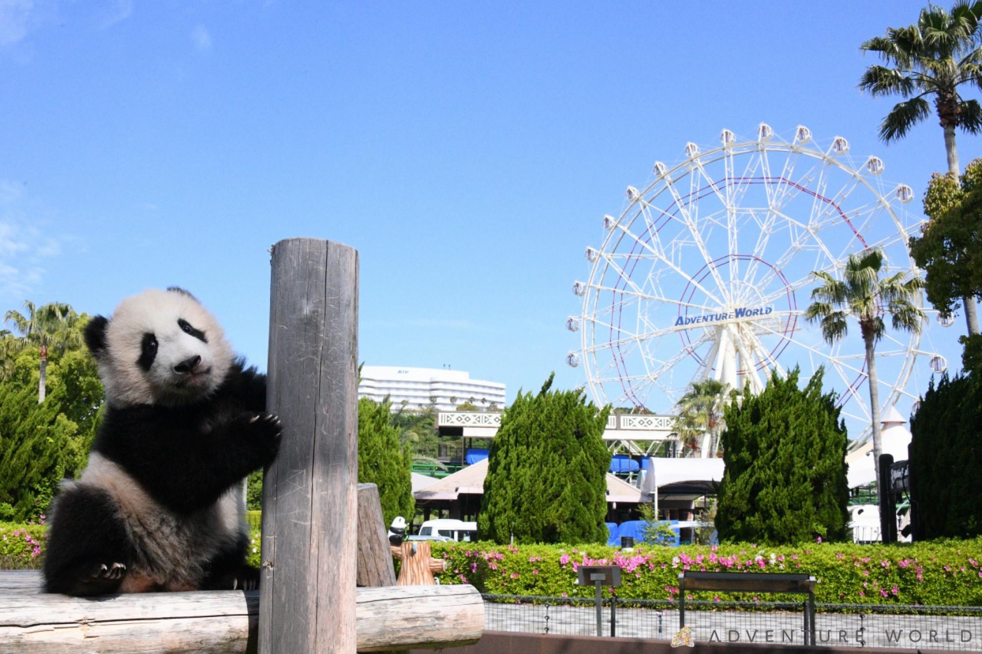 観覧車とパンダ